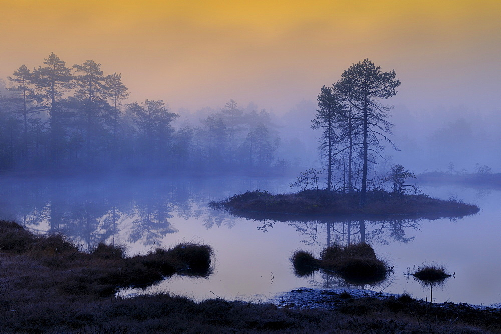 Early morning, dawn, in the swamp, Dalarna, Sweden, Scandinavia, Europe