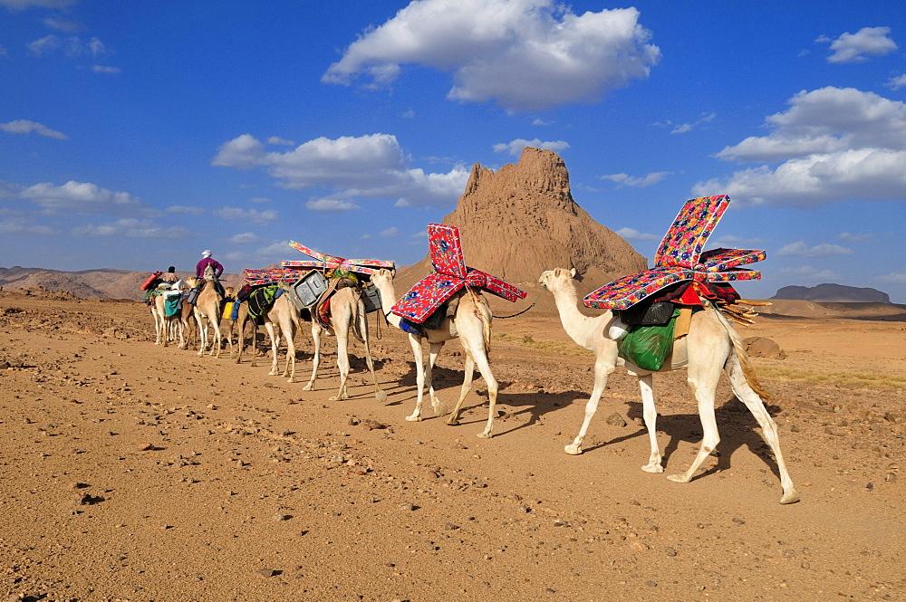 Group of camels, caravan in the volcanic landscape of Hoggar, Ahaggar Mountains, Wilaya Tamanrasset, Algeria, Sahara, North Africa