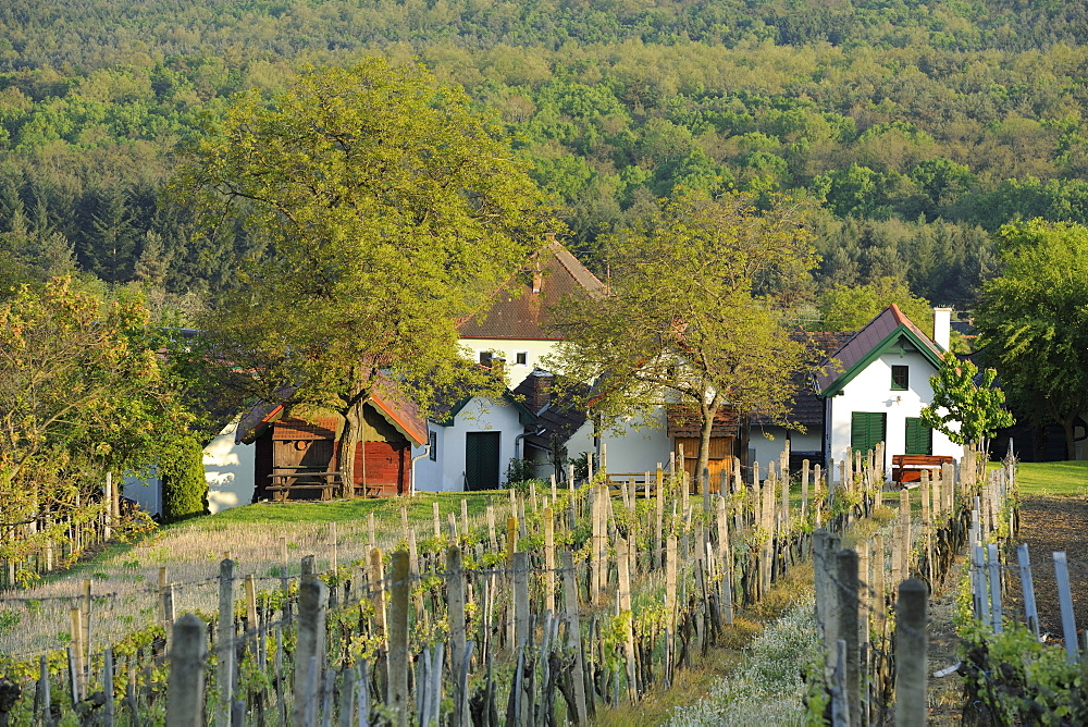 Wine growers' houses on Csaterberg, Kohfidisch, Burgenland, Austria, Europe