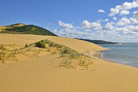Landscape with sand dunes on Hokianga Harbour, Opononi, North Island, New Zealand