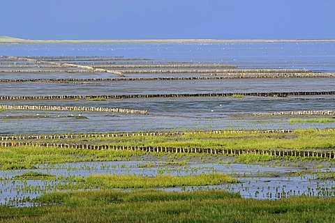 Breakwaters or groynes, coastal protection measures, Noderfriedrichskoog tidal flats, Nationalpark Schleswig-Holsteinisches Wattenmeer, Schleswig-Holstein Wadden Sea National Park, Eiderstedt peninsula, North Friesland region, Schleswig-Holstein, Germany,