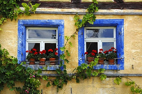 Two windows with geraniums and blue borders on the Haeckergut farm from the Steigerwaldrand, built in 1717, from Ergersheim, Franconian open-air museum, Eisweiherweg 1, Bad Windsheim, Middle Franconia, Bavaria, Germany, Europe