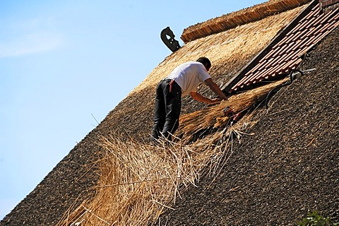Man repairing a thatched roof, Schwarzenbeck, Schleswig Holstein, Germany, Europe
