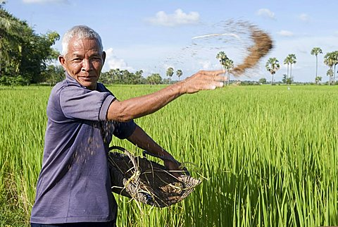 Farmer putting natural fertilizer on his rice field, Takeo Province, Cambodia