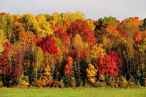 Trees in striking autumn colors, Ontario, Canada