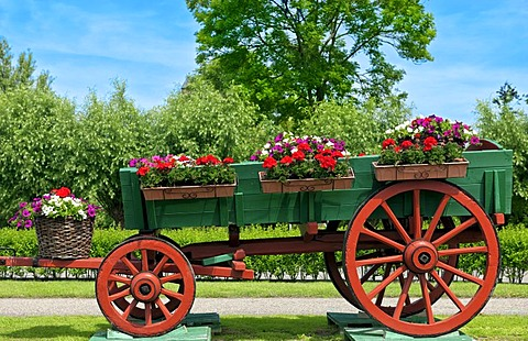 Old wagon decorated with pots of flowers