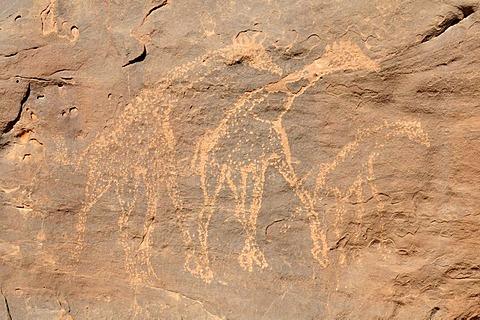 Giraffe engraving, neolithic rockart of the Acacus Mountains or Tadrart Acacus range, Tassili n'Ajjer National Park, Unesco World Heritage Site, Algeria, Sahara, North Africa