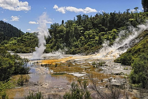 Artists Palette, Orakei Korako Cave and Thermal Park, Hidden Valley, Taopo-Rotorua, North Island, New Zealand
