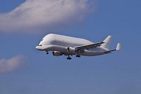 Airbus Beluga or Super Transporter Number 5 in flight