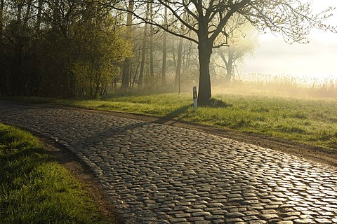 Old country road with cobblestones near Horburg Masslau, Saxony-Anhalt, Germany, Europe