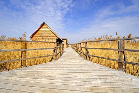 Federseesteg footbridge in the marsh with shelter and observation tower, Bad Buchau, Landkreis Biberach district, Baden-Wuerttemberg, Germany, Europe