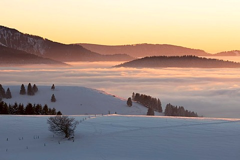 Evening light with high fog on Mt. Schauinsland in the Black Forest, Baden-Wuerttemberg, Germany, Europe