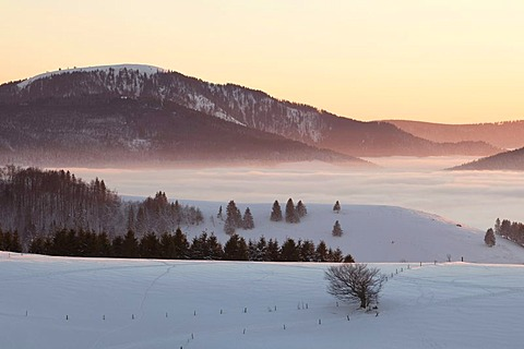 Winter landscape with evening light and fog with a view on Mt. Belchen, southern Black Forest, Black Forest, Baden-Wuerttemberg, Germany, Europe