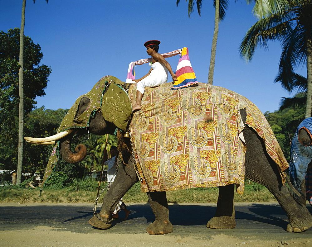 Man riding decorative elephant, Kandy, Sri Lanka, Asia