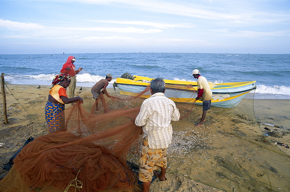 Fishermen pulling in nets, Negombo Beach, Negombo, Sri Lanka, Asia