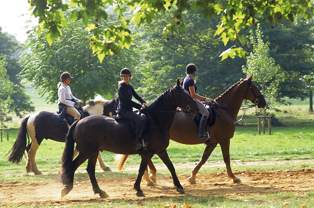 Horse riding in Hyde Park, London, England, United Kingdom, Europe