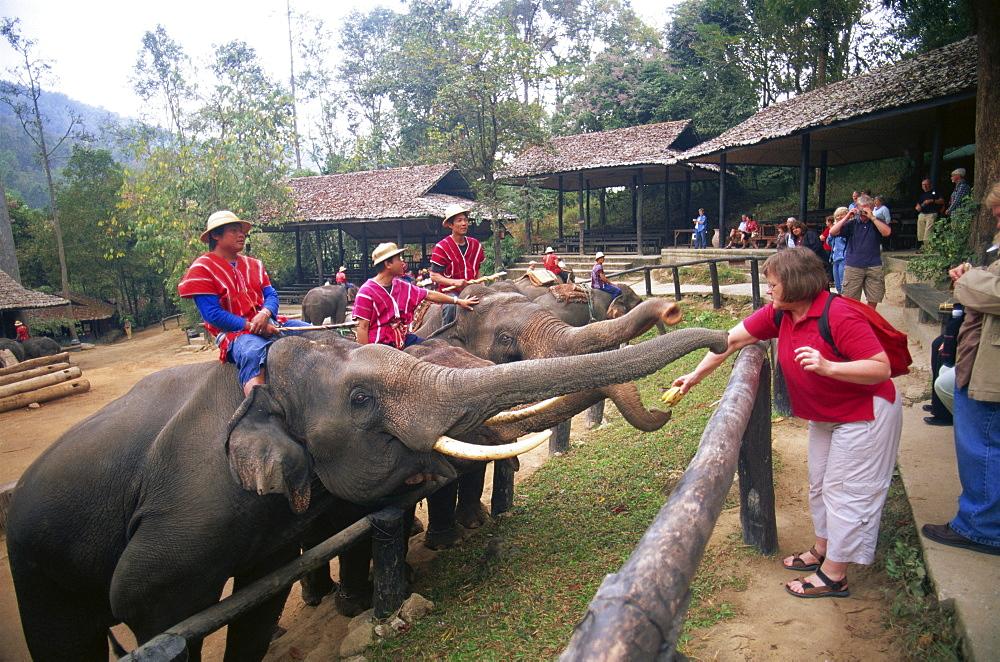 Tourists feeding elephants, Mae Sa Elephant Camp, Chiang Mai, Thailand, Southeast Asia, Asia