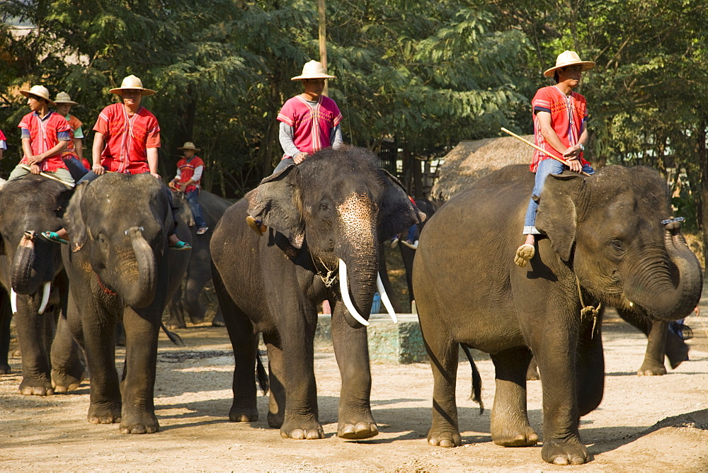Elephant Show, Elephant Camp, Chiang Mai, Thailand, Southeast Asia, Asia