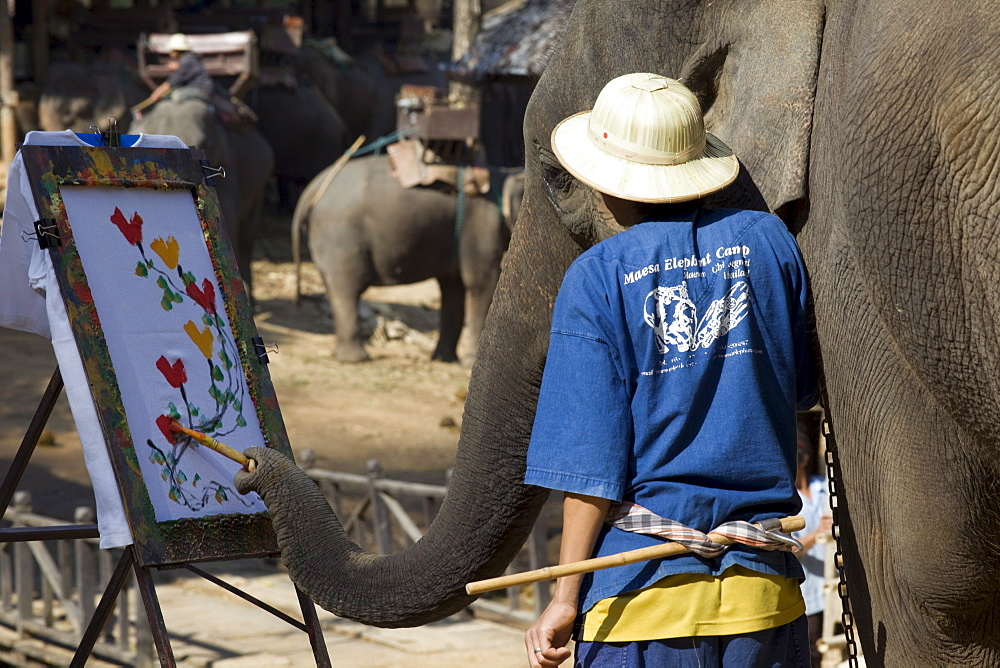 Elephant painting with its trunk, Elephant Camp, Chiang Mai, Thailand, Southeast Asia, Asia
