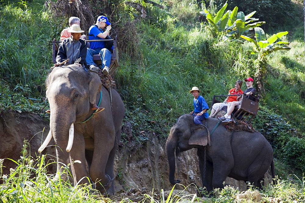 Tourist elephant trekking, Elephant Camp, Chiang Mai, Thailand, Southeast Asia, Asia