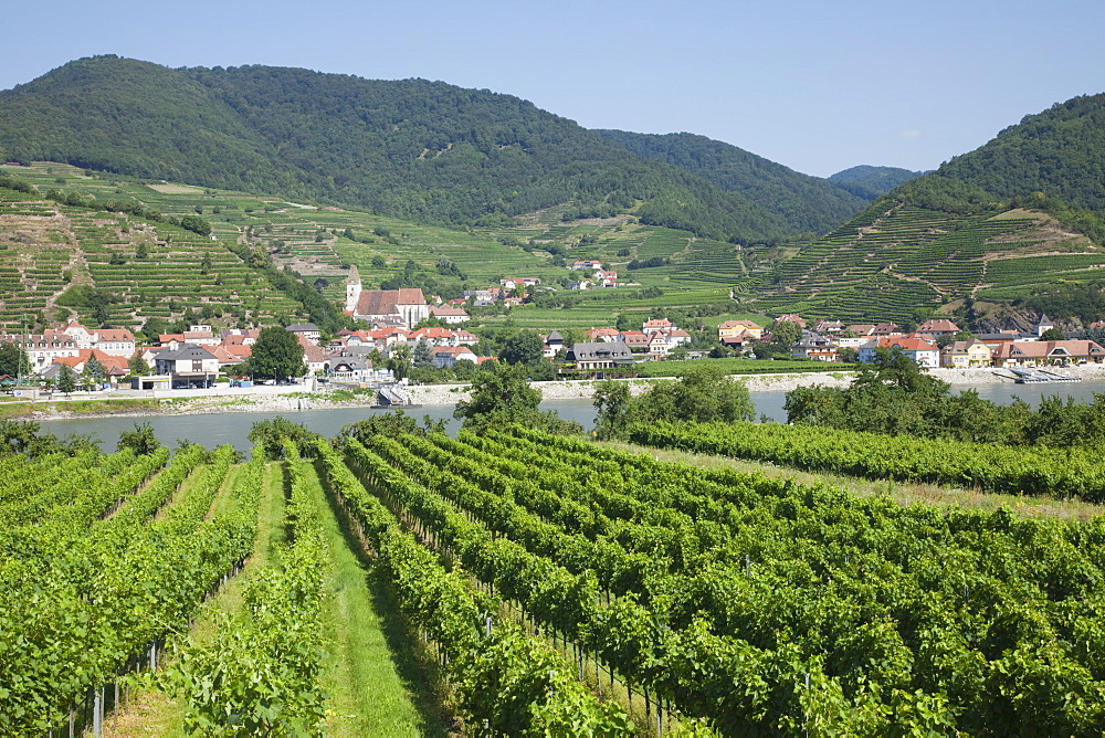 Vineyards at Spitz, Wachau Cultural Landscape, UNESCO World Heritage Site, Austria, Europe