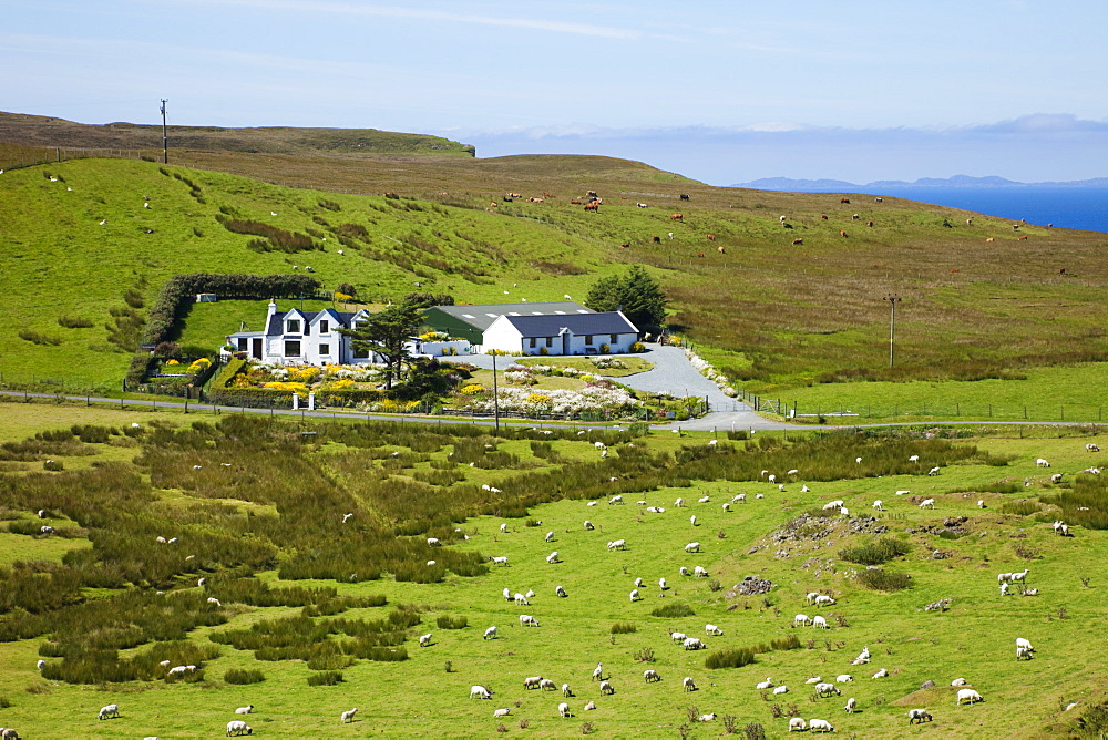 Farmhouse surrounded with sheep and cattle, Isle of Skye, Inner Hebrides, Scotland, United Kingdom, Europe - 834-7231