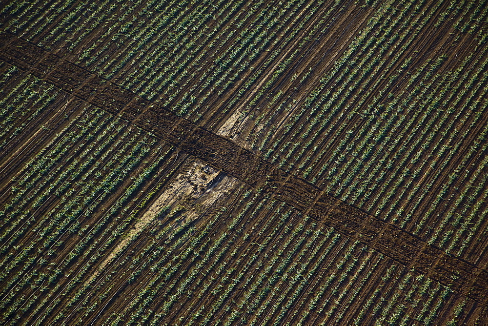 Aerial abstractive view of the agriculture fields of the northern Negev desert - 837-1076