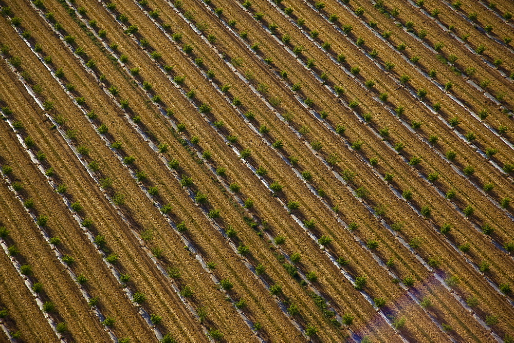 Aerial abstractive view of the agriculture fields of the northern Negev desert - 837-1082