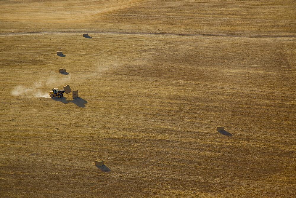 A tractor stacking hey in a field in the northern Negev desert