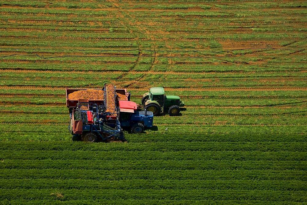 crop harvesting in the Negev desert - 837-1101