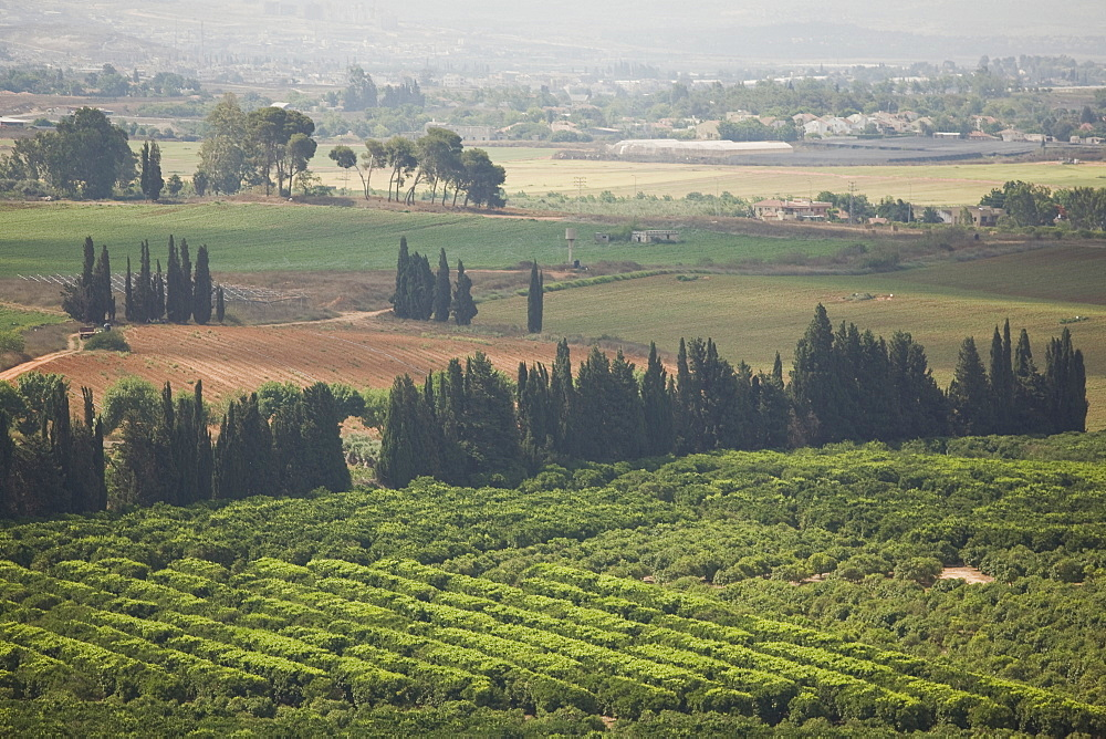 Aerial view of a orchard in fields of the Sharon, Israel