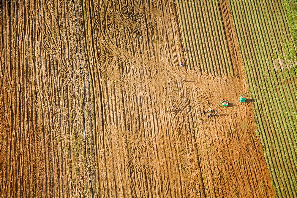 Aerial photograph of the agriculture fields of the Sharon, Israel