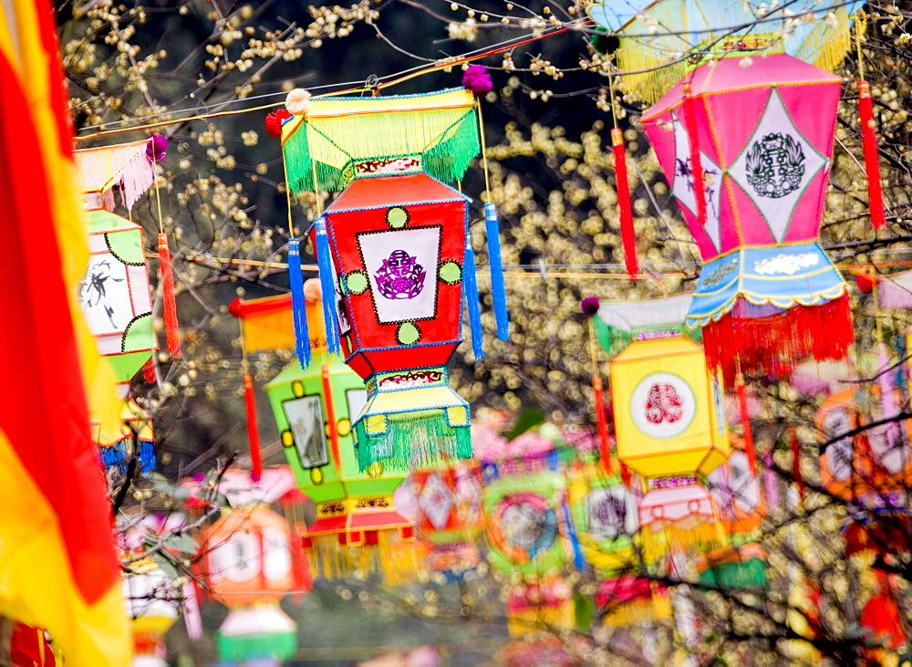 Multicolored handmade lanterns hang from trees in a park during the Chinese New Year Spring Festival, Chengdu, Sichuan, China, Asia - 839-24