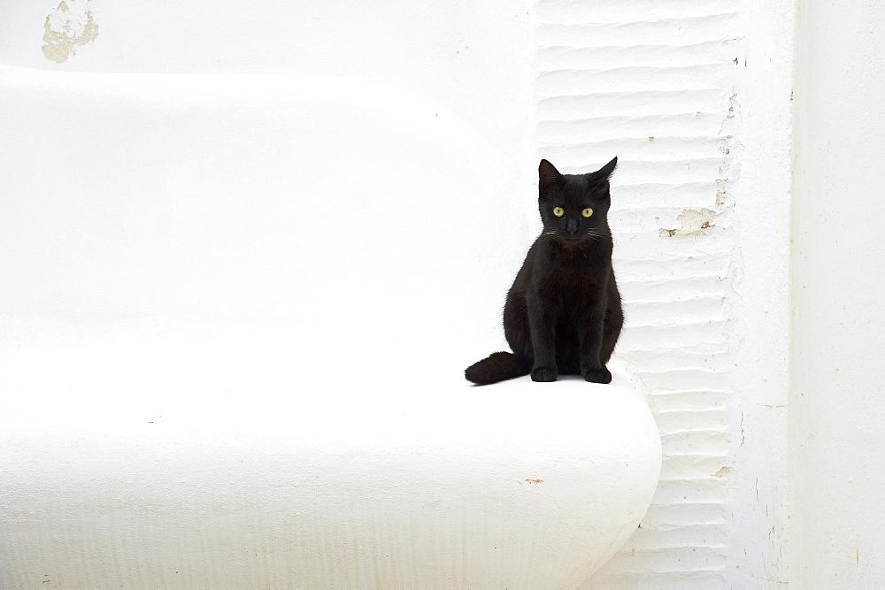 Cat, Pyrgos village, Tinos, Cyclades, Greek Islands, Greece, Europe - 841-1044