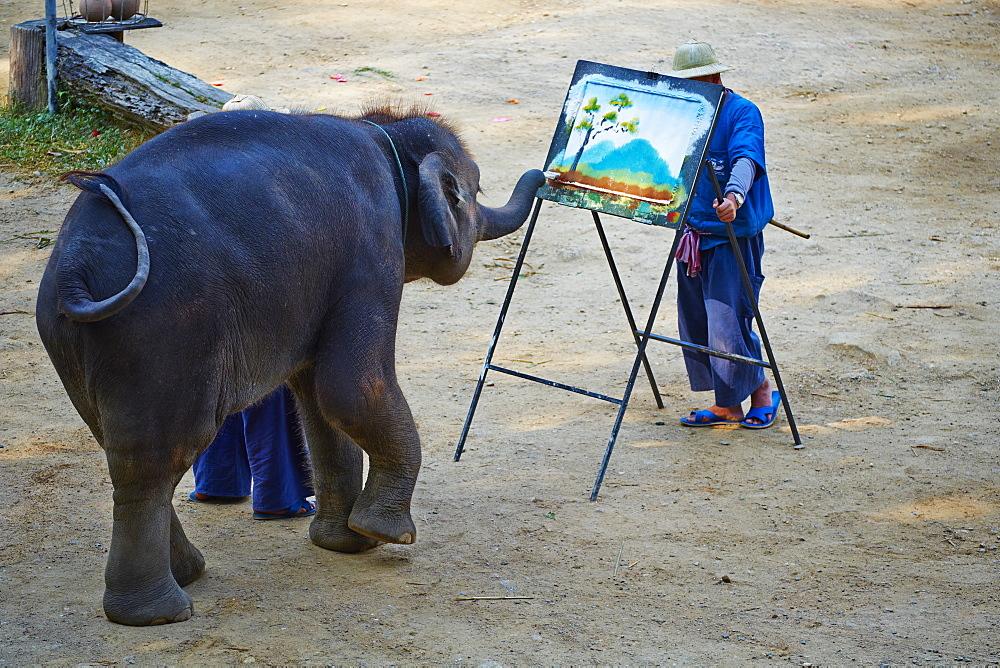 Elephant show for tourist, Mae Sa, Chiang Mai, Thailand, Southeast Asia, Asia - 841-1540