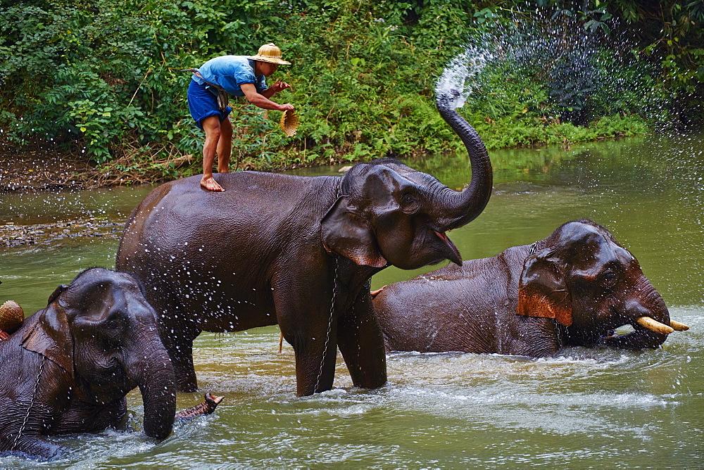 Elephant training, Chiang Dao, Chiang Mai, Thailand, Southeast Asia, Asia - 841-1541