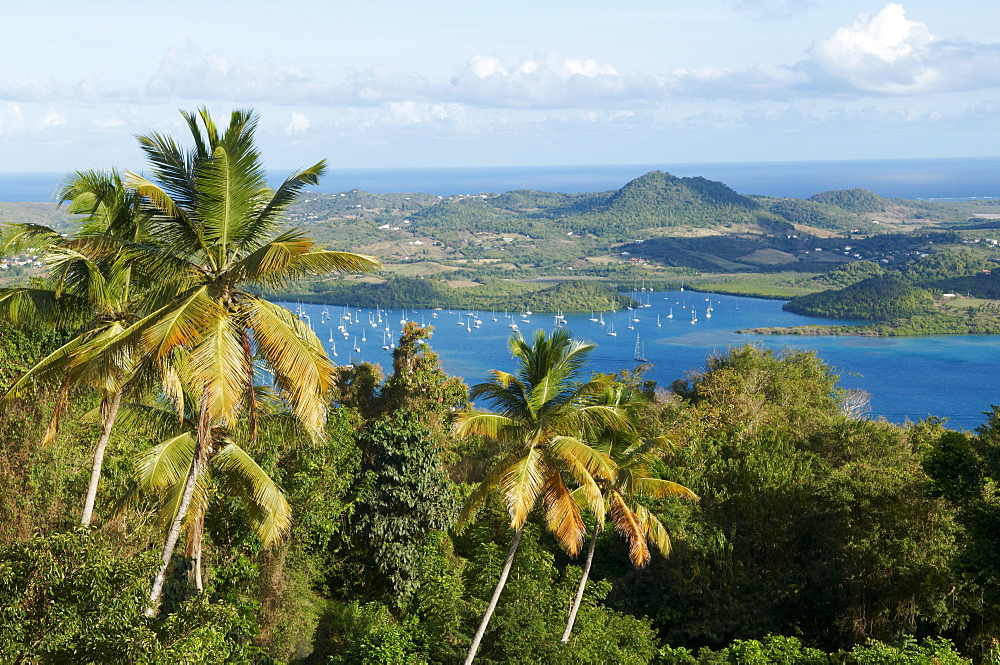 View over palm trees, Cul de Sac Du Marin, Martinique, French Overseas Department, Windward Islands, West Indies, Caribbean, Central America