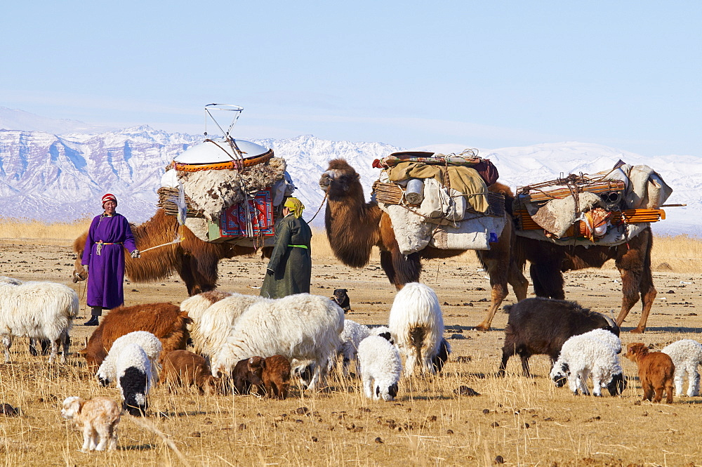 Nomadic transhumance with bactrian camels in winter landscape, Province of Khovd, Mongolia, Central Asia, Asia