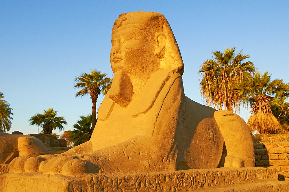 Sphinx path, Temple of Luxor, Thebes, UNESCO World Heritage Site, Egypt, North Africa, Africa