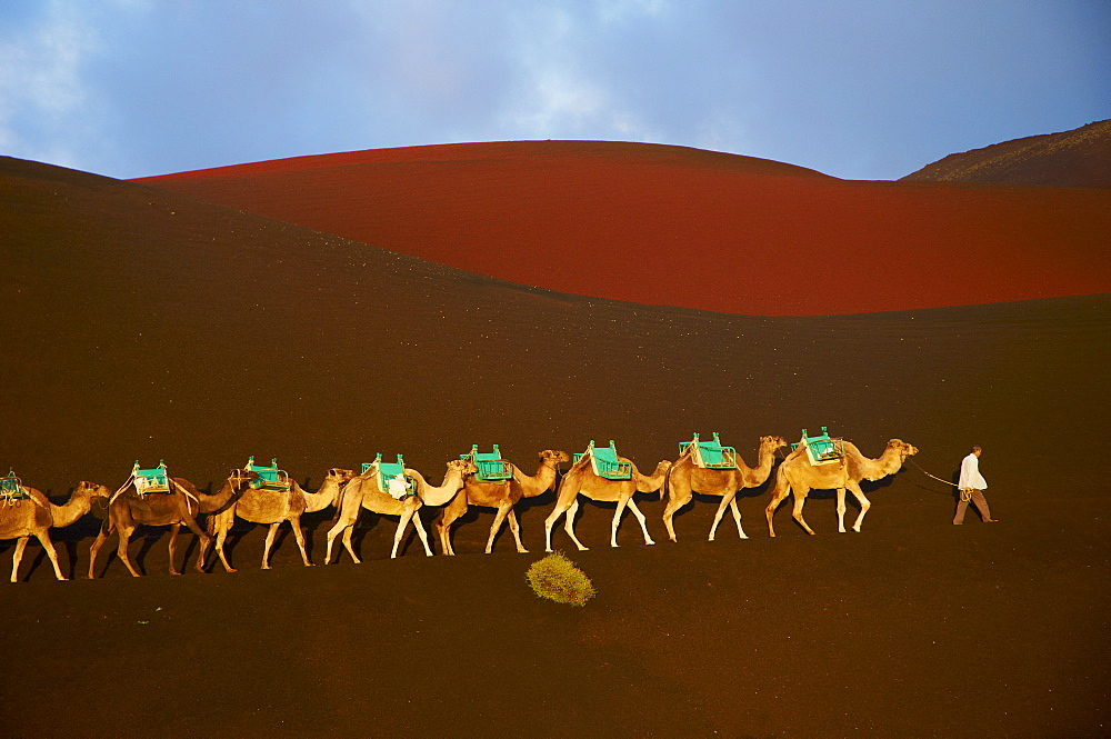 Excursion by camel to visit volcano, National Park of Timanfaya, Lanzarote, Canary Islands, Spain, Europe - 841-68