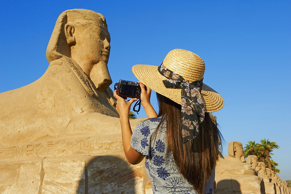 Tourist taking a photo on the Sphinx path, Temple of Luxor, Luxor, Thebes, UNESCO World Heritage Site, Egypt, North Africa, Africa