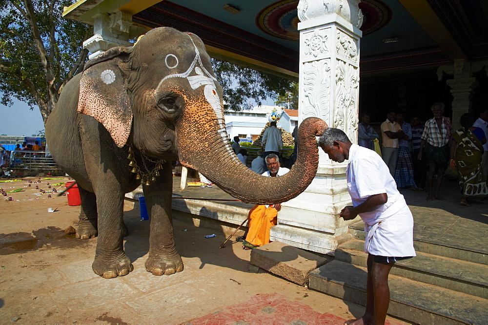 Benediction of elephant, Sri Jambukeshwara temple, Tiruchirappalli (Trichy), Tamil Nadu, India, Asia