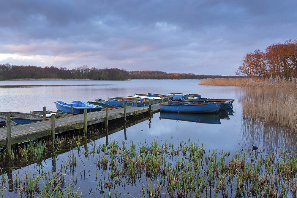 A view of Ormesby Little Broad, Norfolk, England, United Kingdom, Europe