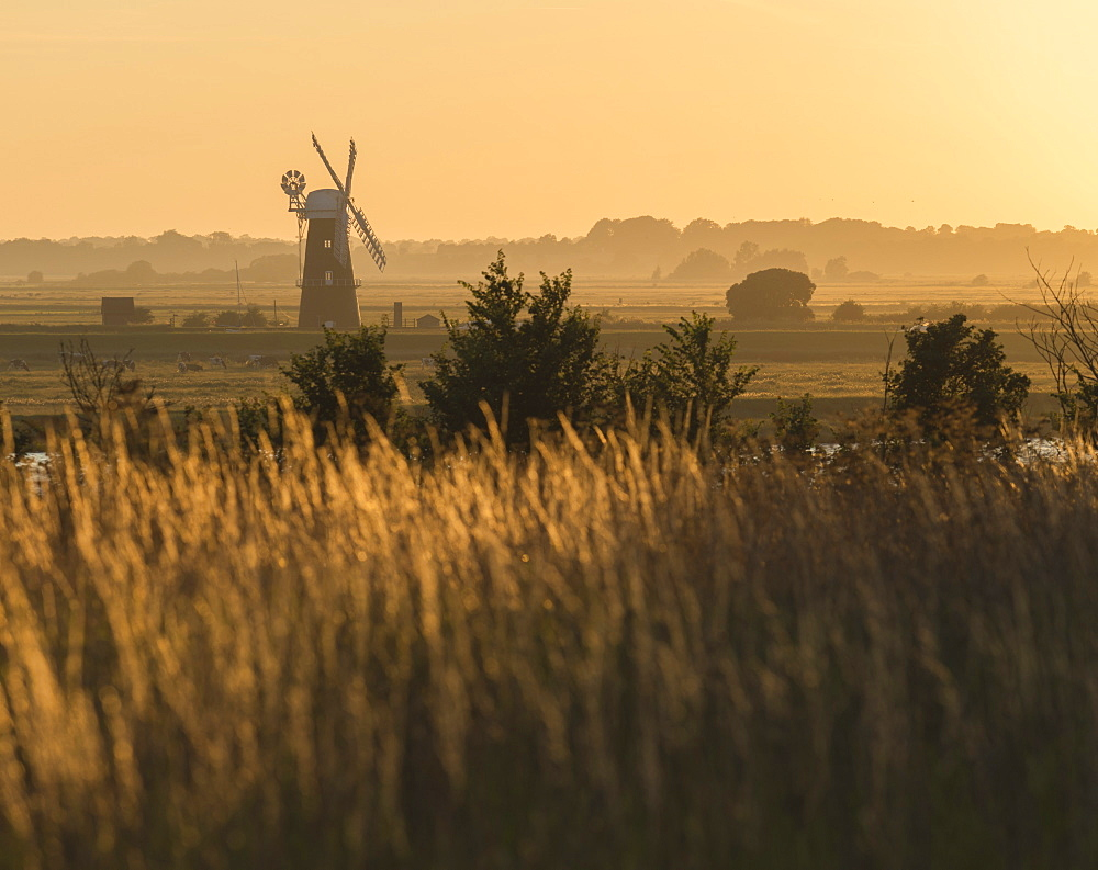 A view across marshland towards Berney Arms Mill, Norfolk, England, United Kingdom, Europe