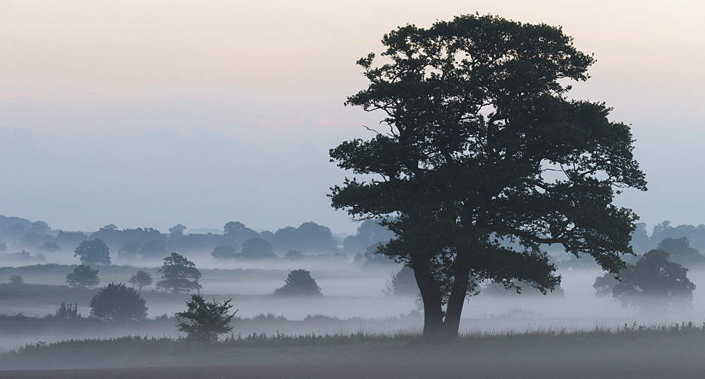A misty morning near Sculthorpe, Norfolk, England, United Kingdom, Europe