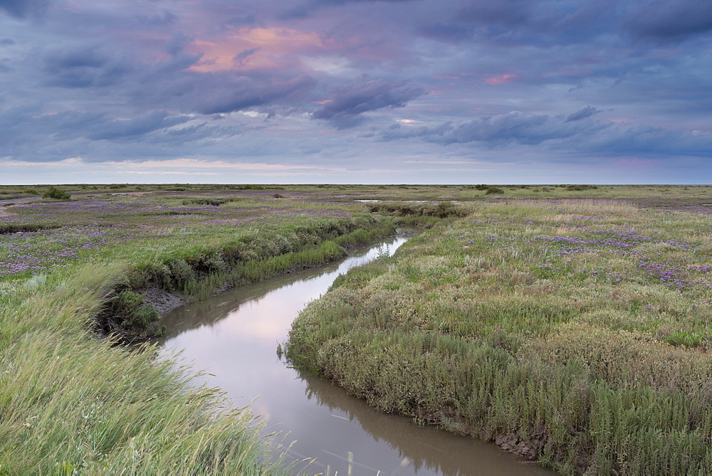 The Saltmarshes with sea lavender at Stiffkey, Norfolk, England, United Kingdom, Europe - 842-485