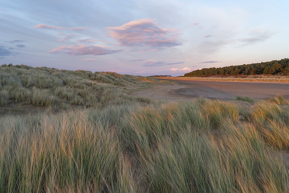 The dunes, beach and pinewoods at Holkham Bay, Norfolk, England, United Kingdom, Europe