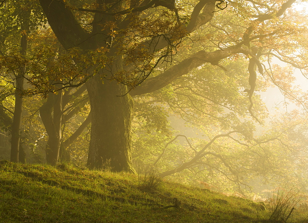 Early morning sunlight on the autumnal trees at Park Brow, Cumbria, England, United Kingdom, Europe - 842-558