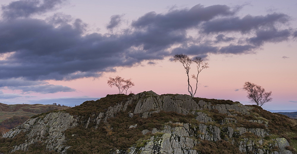 Skeletal trees atop crags at twilight at Holme Fell, Lake District National Park, Cumbria, England, United Kingdom, Europe - 842-559