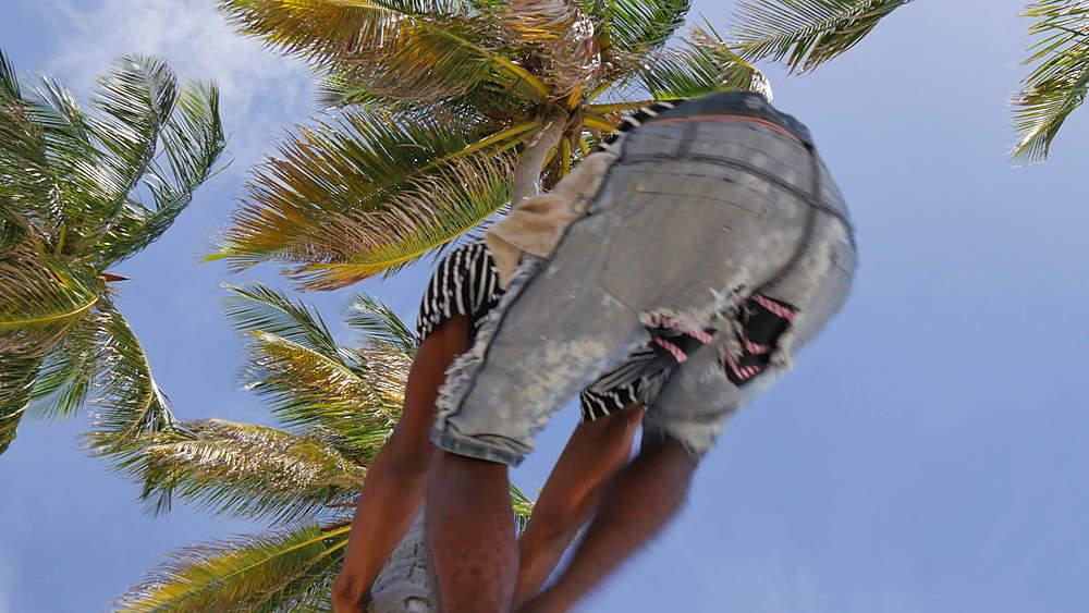 Bottom Bay, St Philip, Barbados, West Indies, Caribbean - 844-10984